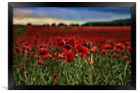 Field of Remembrance, Framed Print