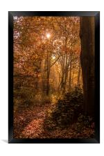 In to the Woods, Framed Print