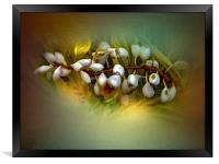 Nature Glows, Framed Print