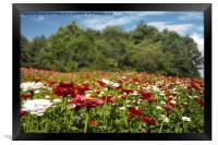 Field of Flowers, Framed Print