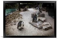 Penguin Playground, Framed Print