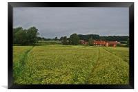 barley field, Framed Print