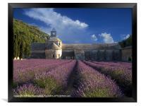 Lavender Fields in France, Framed Print