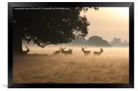 Sunrise in the Park, Framed Print