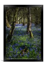 Blubells On The Surrey Hills, Framed Print