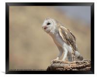 Barn Owl with Prey, Framed Print