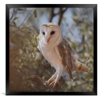 Barn Owl in the Bush, Framed Print