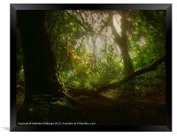 Blaise Woods, Framed Print