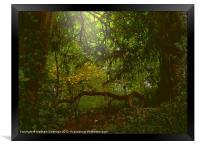 Forest Light, Framed Print