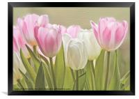 Translucent Tulips, Framed Print
