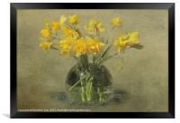 Springtime Daffodils, Framed Print