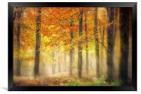 Autumn Gold, Framed Print