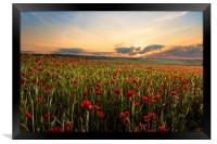 Poppy Fields, Framed Print
