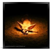 Golden Desert Fox, Framed Print