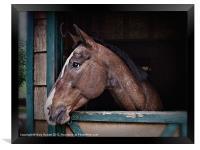 A Horse Of Course - Retro, Framed Print