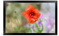 Poppy, Framed Print
