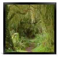 Secret pathway to where, Framed Print