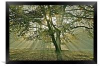 Tree, sun rays, early mist, Framed Print