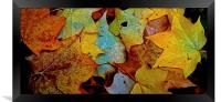 Fallen Autumn Leafs, Framed Print