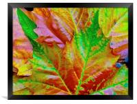 Bright Autumn Leafs, Framed Print