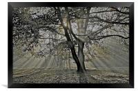 Autumn into Winter Sun Rays, Framed Print