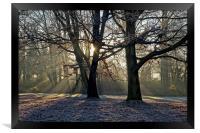 Frosty Morning Sunrise                           , Framed Print