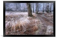 Forest frost, Framed Print