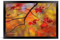 The Glory of Fall, Framed Print