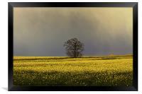 Stormy sky over rape field, Framed Print