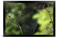 Spiders Web covered in dew, Framed Print