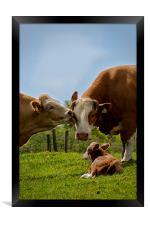 Kissin cows, Framed Print