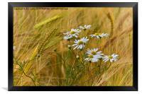 Todays flower, tomorrows flour, Framed Print