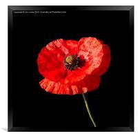Poppy , Framed Print