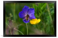 Cranesbill, buttercup and wasp, Framed Print