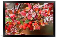 Frosted Berries, Framed Print
