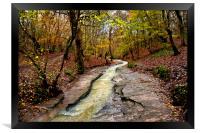 Wet Walk in the Woods, Framed Print