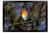Robin Red Breast, Framed Print