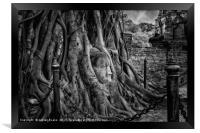 Buddha Head Ayutthaya, Framed Print