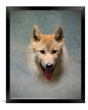 Wolf pup, Framed Print