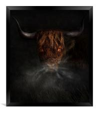 A west highland cow, Framed Print