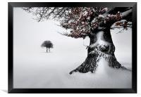 Oak in the snow, Framed Print