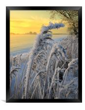Frosts in the grass, Framed Print