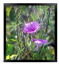 Amazing Pink Wildflower, Framed Print