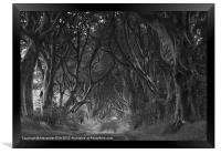 The Dark Hedges, Framed Print