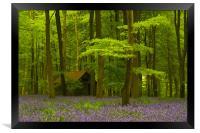 Embley Wood Bluebells, Framed Print
