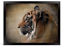 Tiger Portrait, Framed Print
