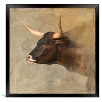 Texas Longhorn #2, Framed Print