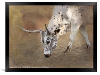 Texas Longhorn Cow, Framed Print