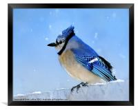 Watching the Snow, Framed Print