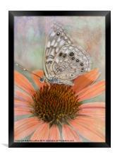 Hackberry Emperor Butterfly, Framed Print